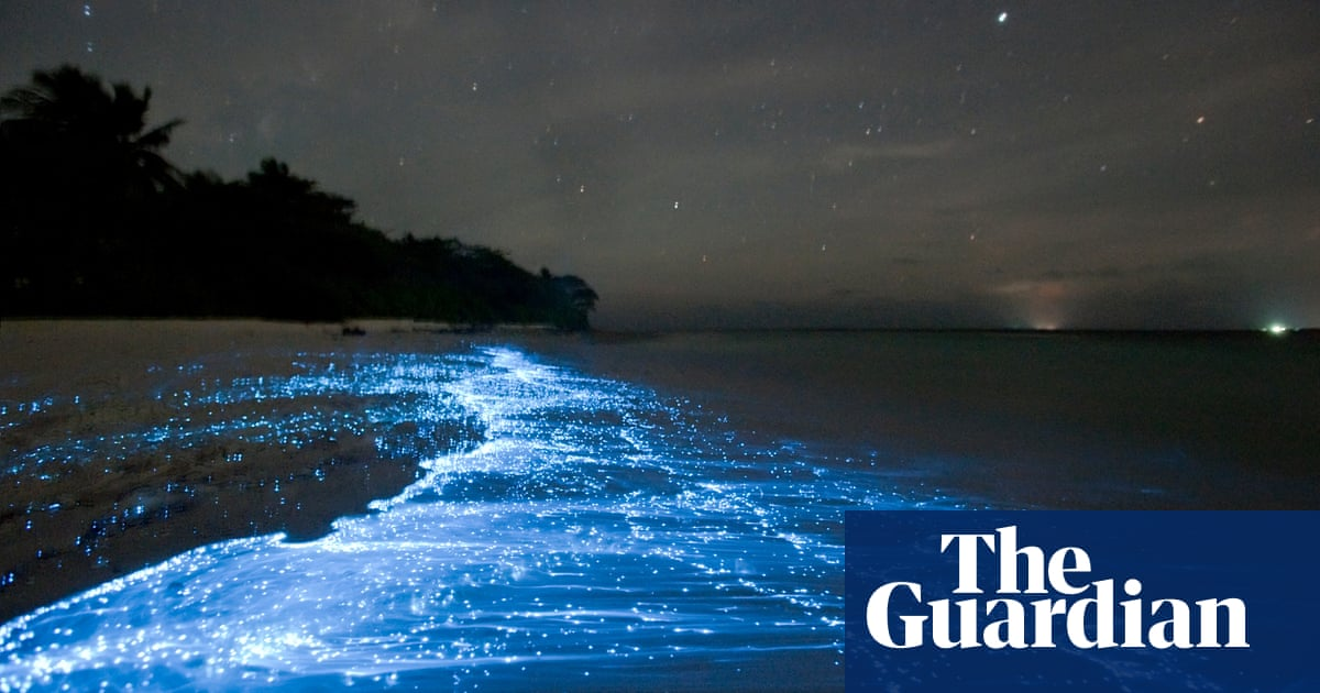 Hot summer nights: 'On the phosphorescent sea, I realised I was just a tiny part of something bigger'