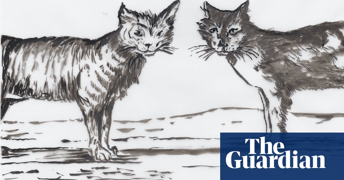 'Your cat is watching you!' The fearless felines hidden by their author