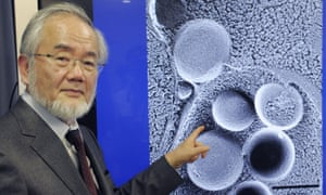 Nobel prize-winner Yoshinori Osumi