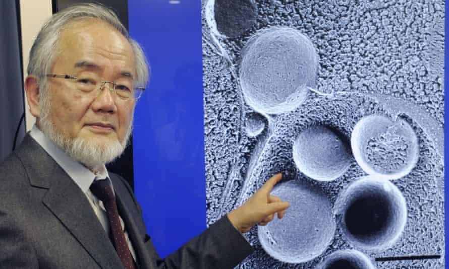 Nobel prize-winner Yoshinori Osumi
