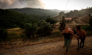 Horses in the Algarve are led away from a wildfire in August