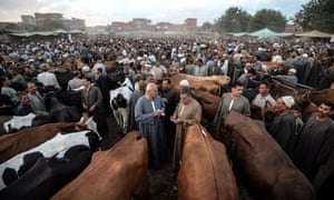 Egyptian cattle traders gather at the Ashmun market, Egypt on 15 August 2018, to sell livestock to customers for the annual  Eid al-Adha holiday.