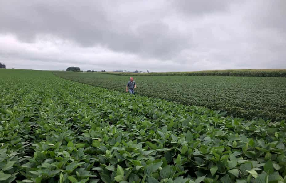 Soybean fields in Arlington, Wisconsin, in August 2018, are among those which have been examined for possible damage from dicamba drift