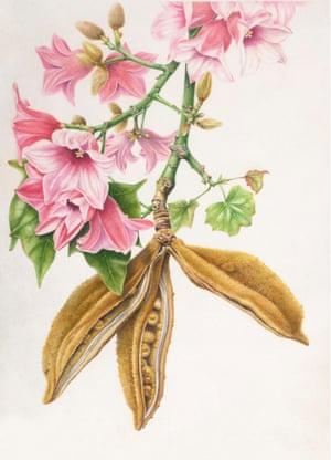 Lacebark by Angela Lober_watercolour on vellum