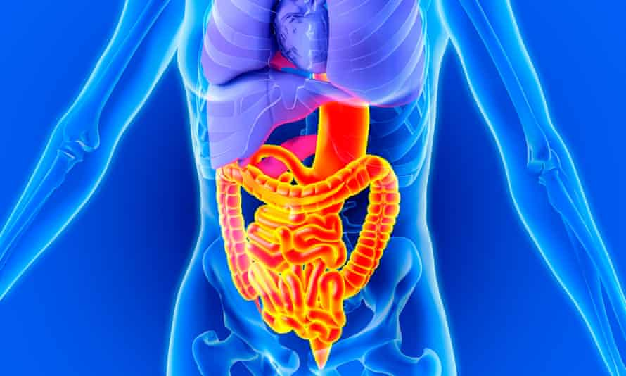 We really do have 'gut-wrenching' experiences because our brains and our stomachs are closely related.