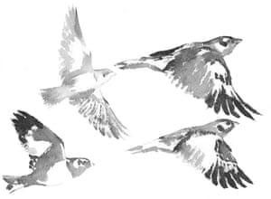 Illustration by Jackie Morris