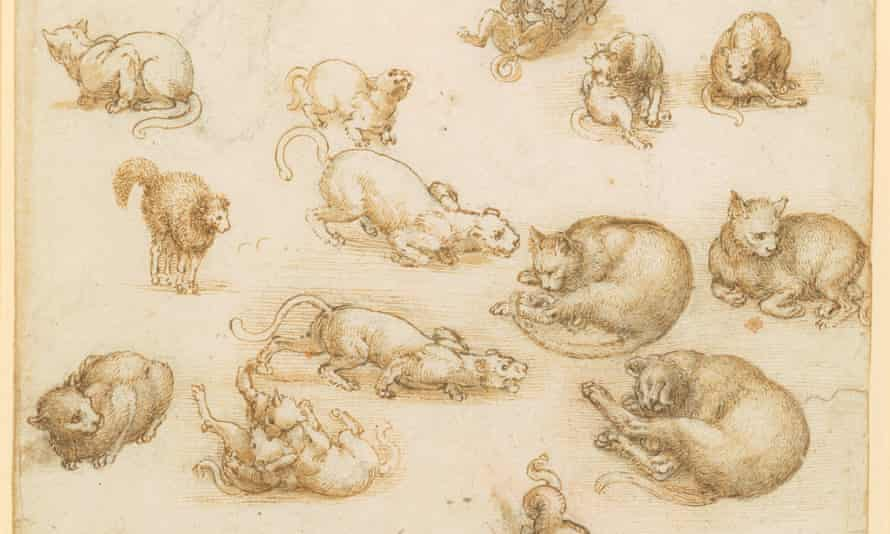 Studies of animals by Leonardo da Vinci in one of the drawings from the collection.