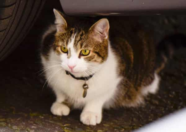 Larry Cameron's cat seen out in Downing Street