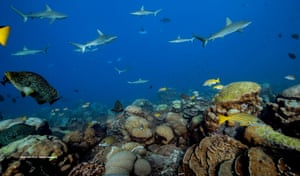 Healthy coral reefs are highly productive and support high biomasses of top predators.