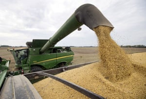 Soybeans being harvested in Brownsburg, Indiana.