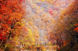 Tourists enjoy the view of red leaves at a scenic area in Fushun, northeast China's Liaoning Province.