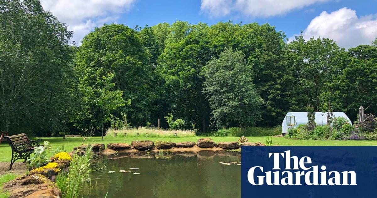 'I've seen a heron, deer, a hare …' Guardian readers' lockdown garden transformations