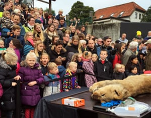 Children watch the dissection of a lion at Odense zoo
