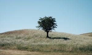 Hawthorn tree in Phoenix Park, Dublin