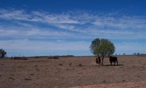 Cleared eucalypts on a floodplain on the Sunshine Coast, Queensland