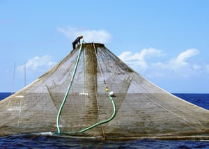 Aquaculture net pen operated by Blue Ocean Mariculture near Kona, Hawaii.