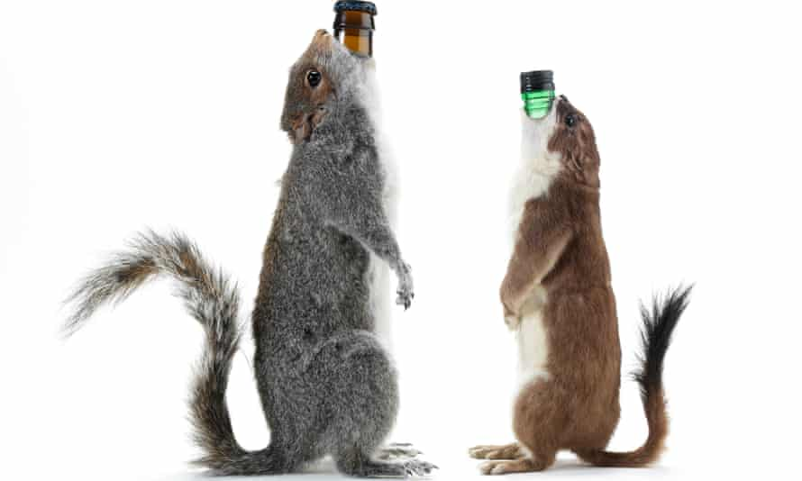 Dead squirrels turned into bottle holders as part of Brewdog's beer promotion.