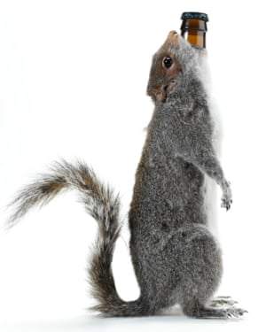 A bottle of The End of History beer inside a stuffed grey squirrel.