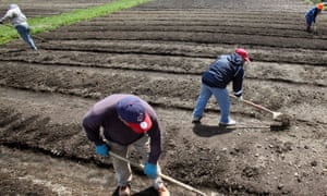 Workers from The Refugee Response prepare soil for seed planting in the Ohio City Farm, off West 25th Street in Cleveland, Ohio.