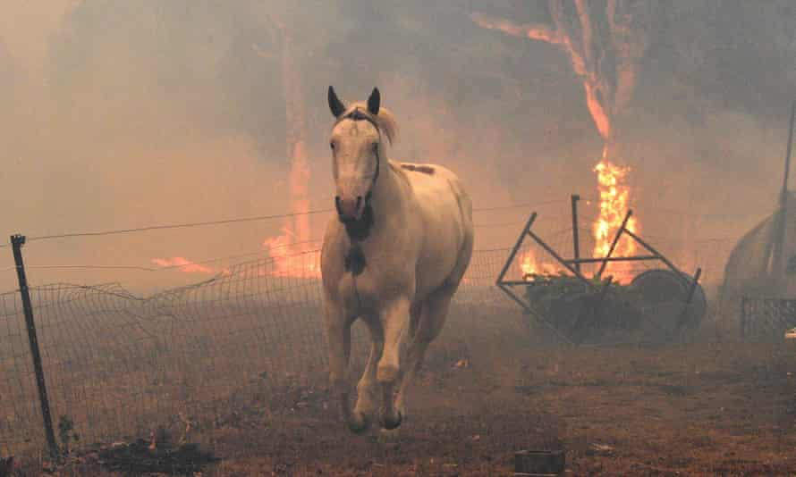 A horse flees from nearby bushfires near the town of Nowra in New South Wales in December 2019. Pep Canadell says human fingerprints are clear in recent extreme weather ecents, including heat waves and fires.