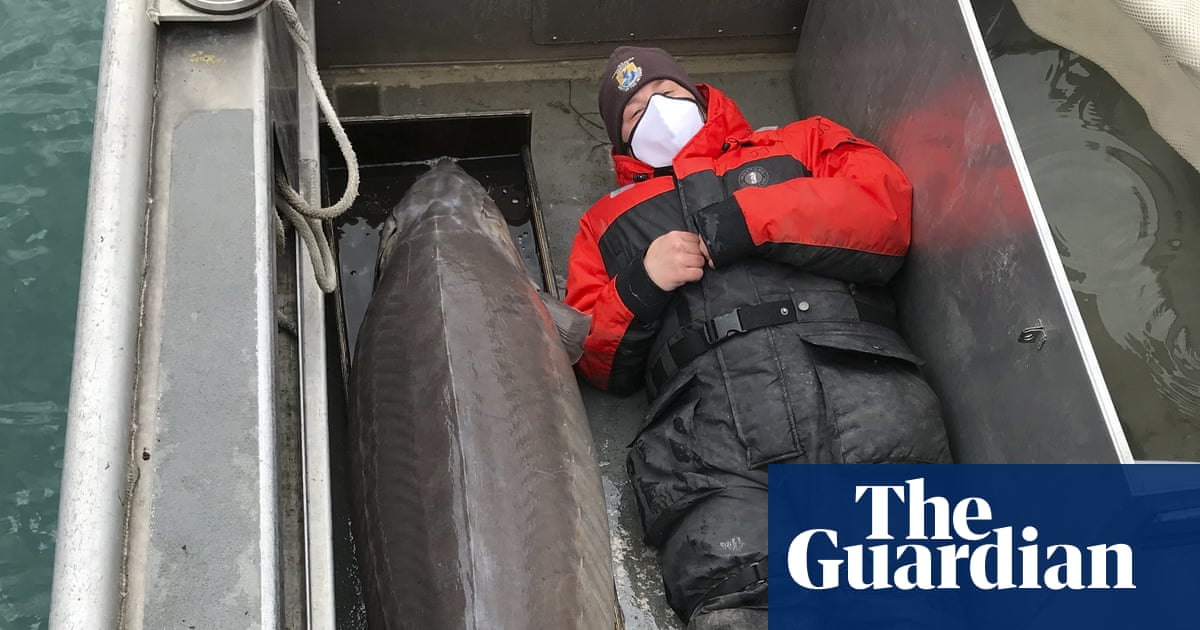 Giant sturgeon caught in Detroit River may be 100 years old