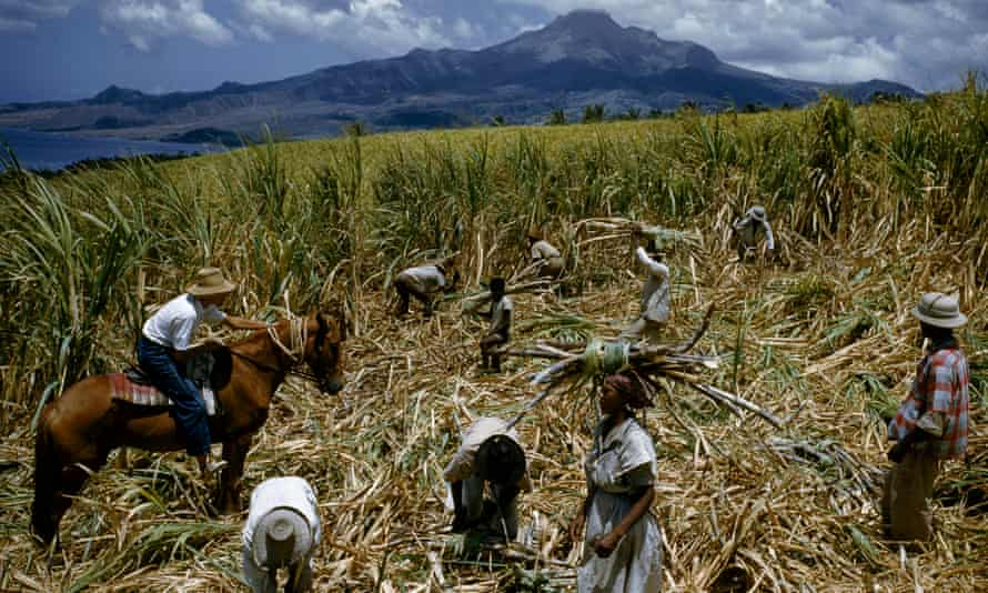 An overseer and sugar-cane cutters in a field in Martinique, 1959.