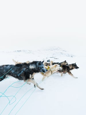 Greenland Dogs in Motion (2018) Approaching a downwards slope, a team of sled dogs is guided by their musher to run alongside the sled, acting as a brake, Ilulissat, Greenland