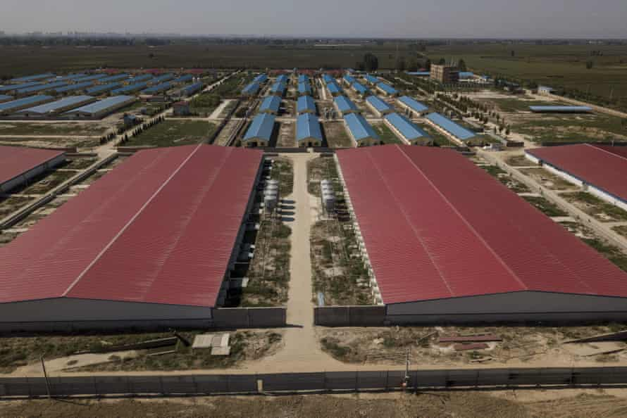 This aerial picture taken on September 24, 2019, shows a quarantined pig farm in Hebei, outside Beijing.