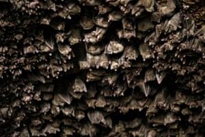 Bats in the Old City in Caesarea, Israel