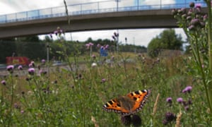 Small Tortoiseshell butterfly urban near the M8 motorway