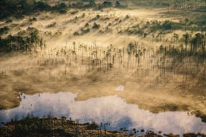 Water from the Chesapeake Bay intrudes on the marsh of Blackwater National Wildlife Refuge, killing trees and drowning the land in its path.