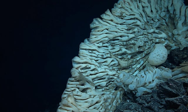 Sea sponge the size of a minivan discovered in ocean depths off Hawaii