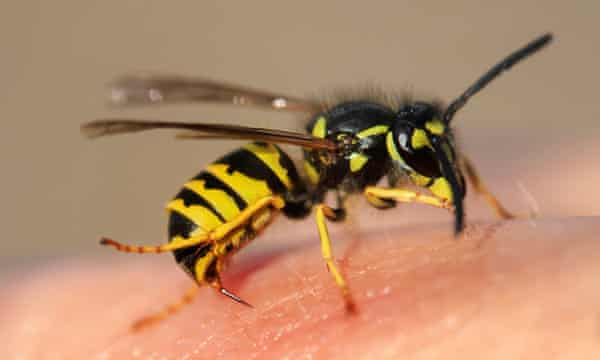 Keep calm and wear white – how to avoid wasp stings | Insects ...