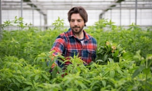 Ben Cross in the West Sussex glasshouses where he grows 50 varieties of alstroemeria.