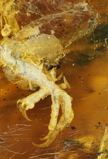 Close up of the foot and shin, showing the translucent skin preserved above ankle region.