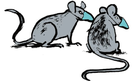 Illustration of two rats wearsing masks