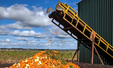 Carrots and other vegetables being processed at a farm in Burscough, Lancashire