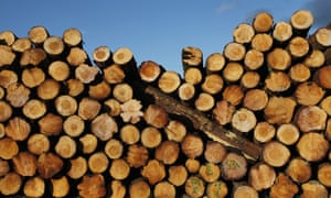 Logs for export in a timber yard in New South Wales
