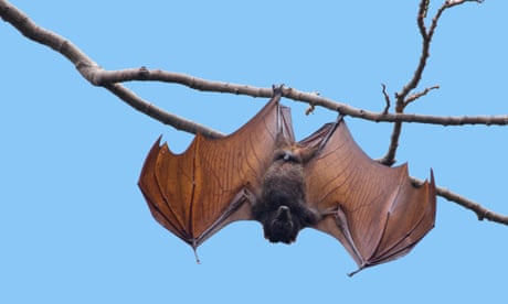 Bat soup, dodgy cures and 'diseasology': the spread of coronavirus misinformation