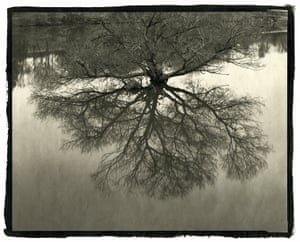 A reflection in water of a tree