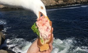 A seagull takes a bit of Alicia Jessop's lobster roll in York, Maine.