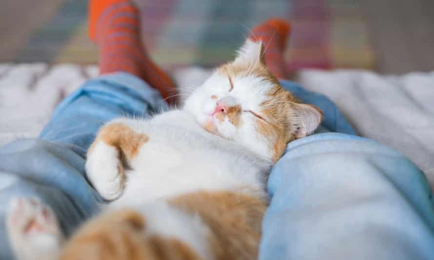 cat asleep on owner's lap