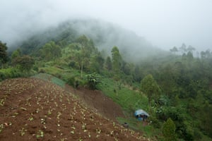 A farm in Cipaganti, Garut, Java, Indonesia.