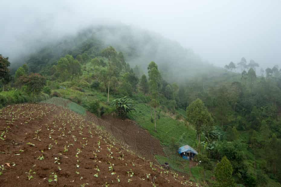 A farm in Cipaganti, Garut, Java, Indonesia.