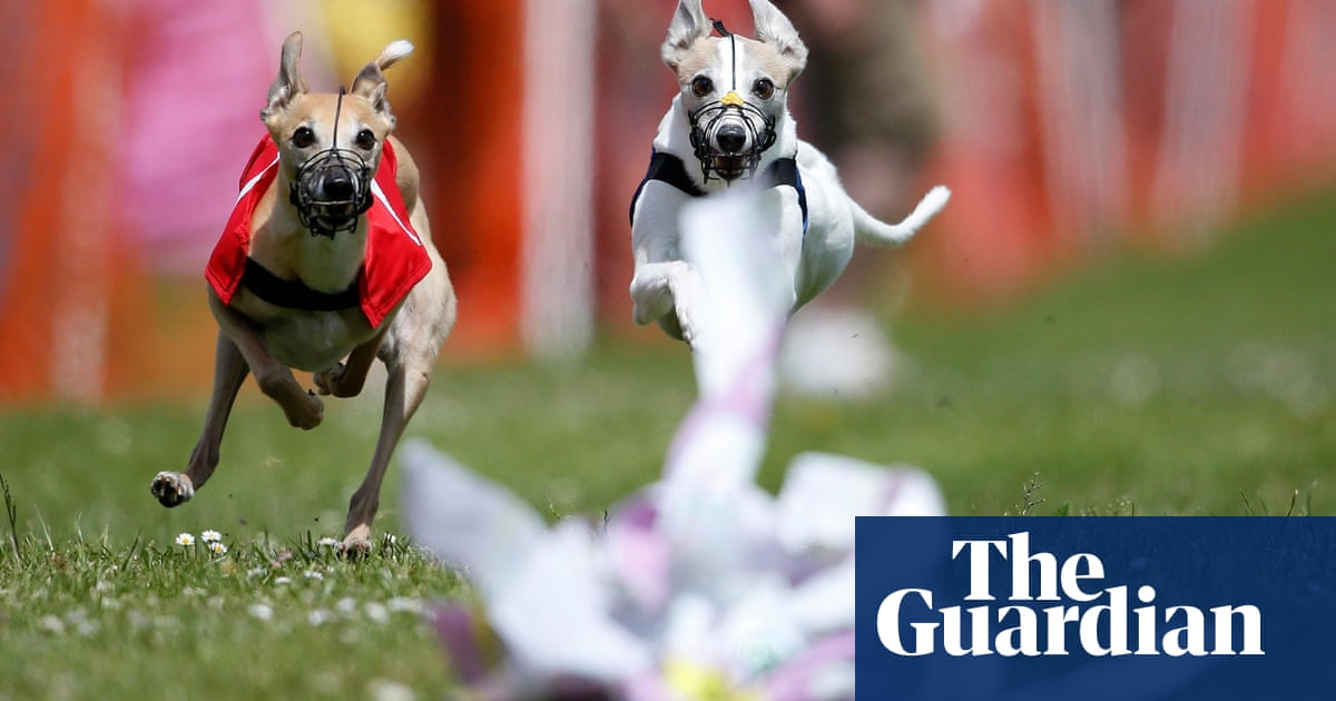 128c06b41c8be The Whippet Derby – in pictures