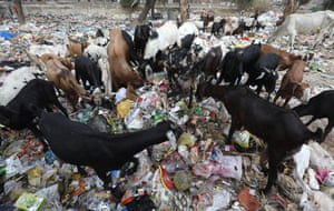 Animals sift through rubbish in New Delhi, India. Figures show India has the world's 14 most plastic-polluted cities.