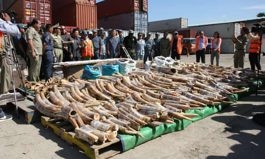 Illegal ivory bound for China.
