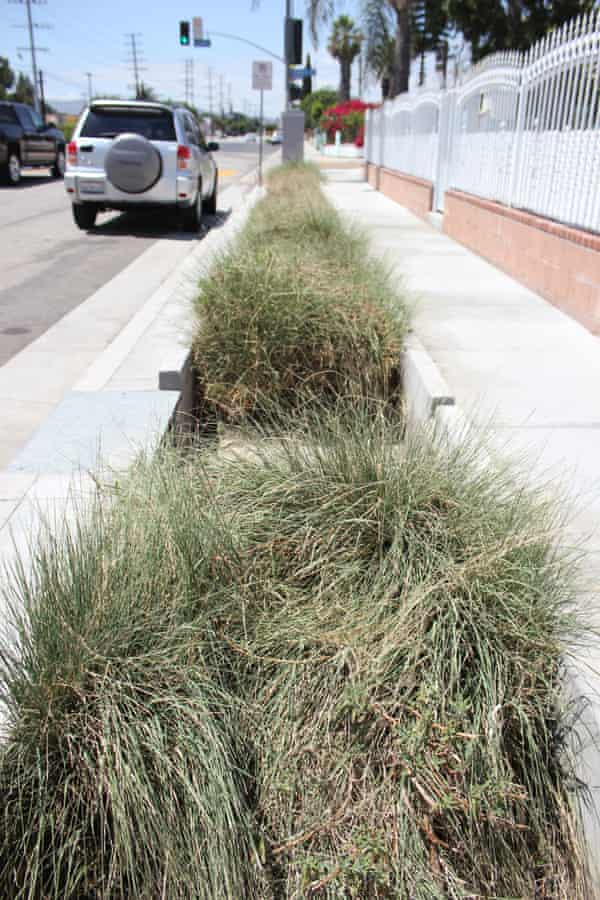Porous pavement and bioswales capture and filter rainwater and runoff.