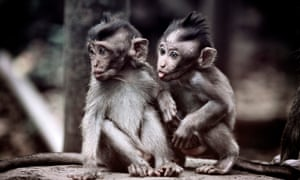The use of monkeys in medical research is controversial, but researchers say that many attempts to study human brain disorders in mice fail because their brains are so different