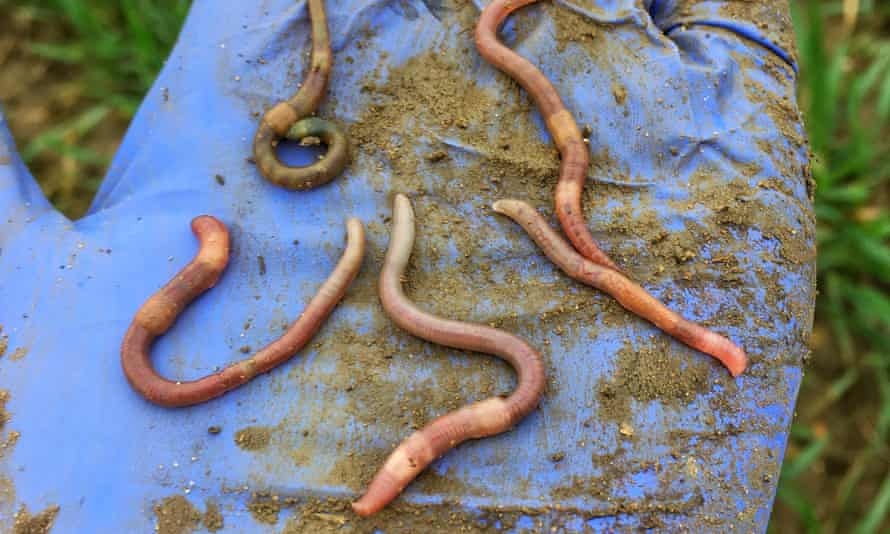 Topsoil worms on a gloved hand